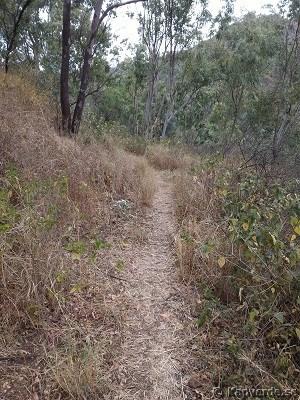 Stig in i skogen för att börja vandra